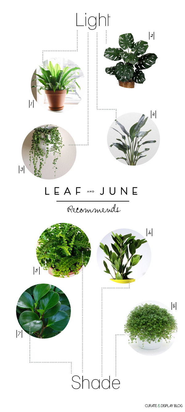 8 Houseplants Leaf and June