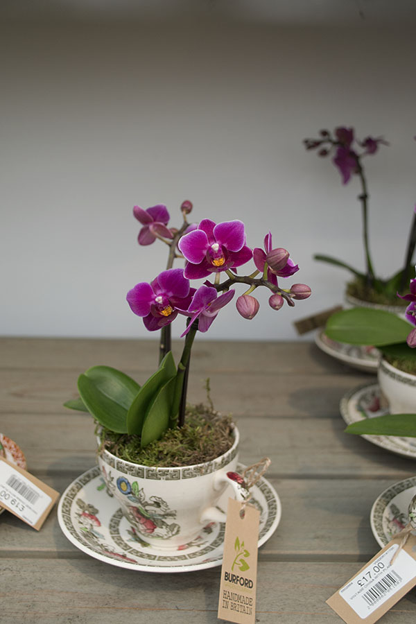 Orchid Teacup Burford