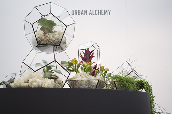 Urban Alchemy Terrariums