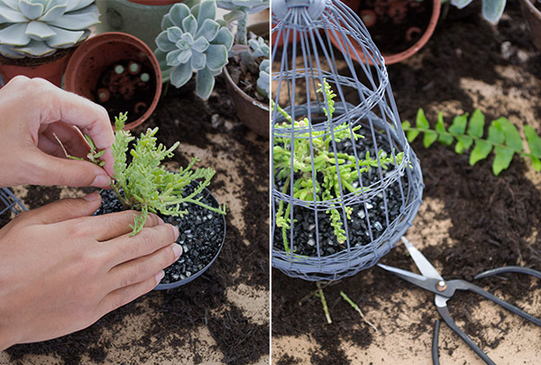 Decorating With Plants Urban Jungle Bloggers2