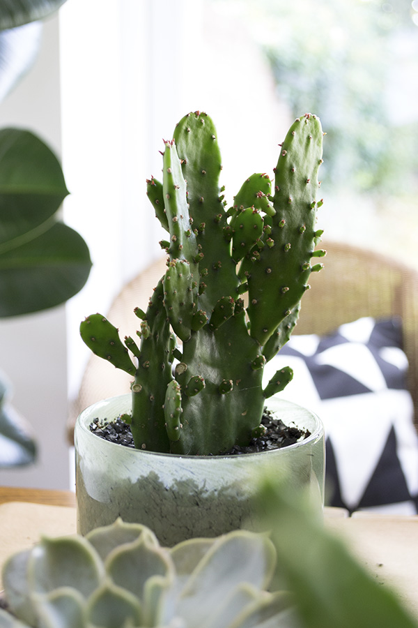 Decorating With Plants Urban Jungle Bloggers8