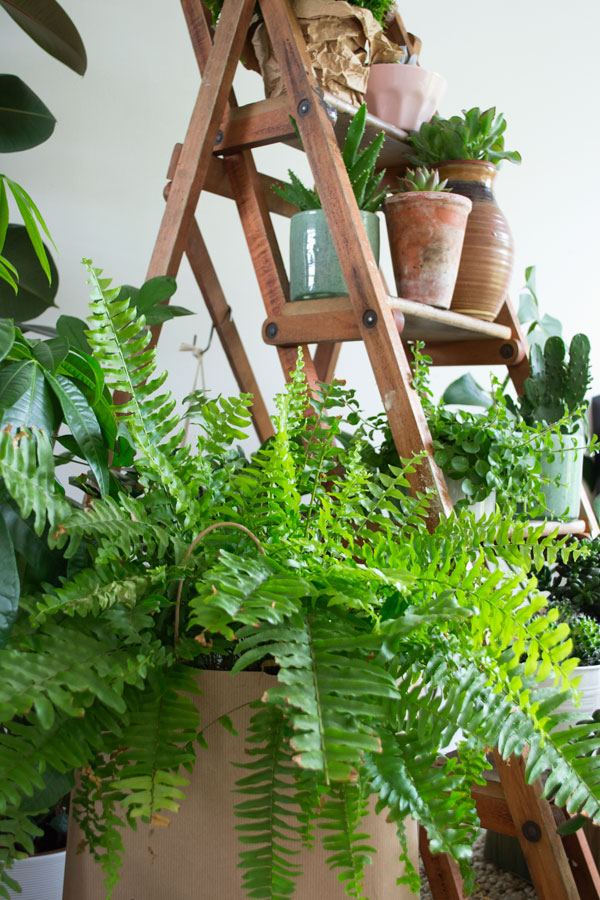 Urban-Jungle-Bloggers-Plant-Gang1