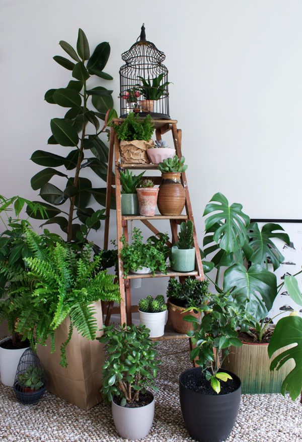 Urban jungle bloggers plant gang curate display for Jungle garden design ideas