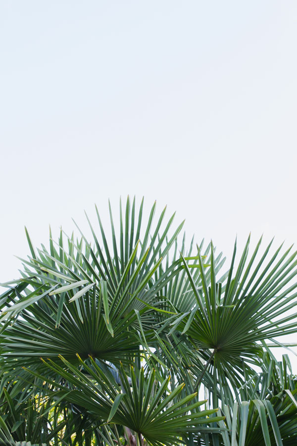 Palm-Leaves-Blue-Sky-Marciac
