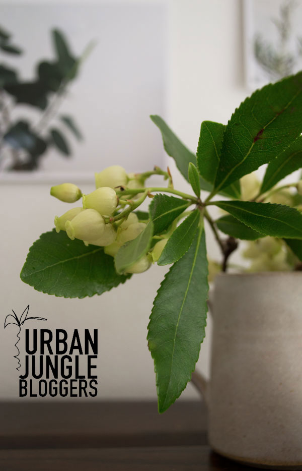 Urban-Jungle-Bloggers-Plants-Art-and-Flowers05