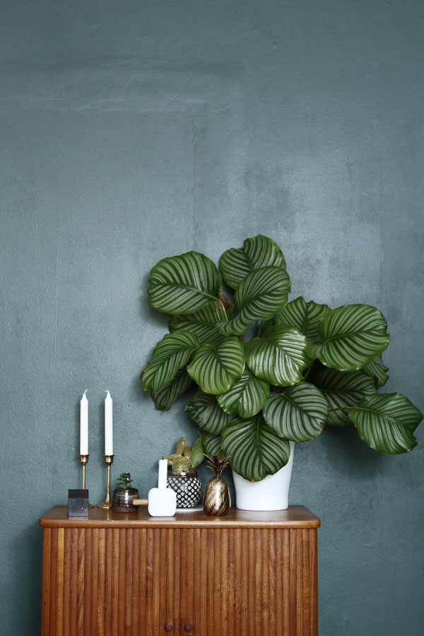 Living and styling with plants Urban Jungle Bloggers book