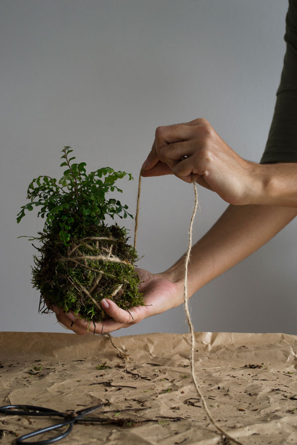 How to make a Kokedama hanging plant moss ball