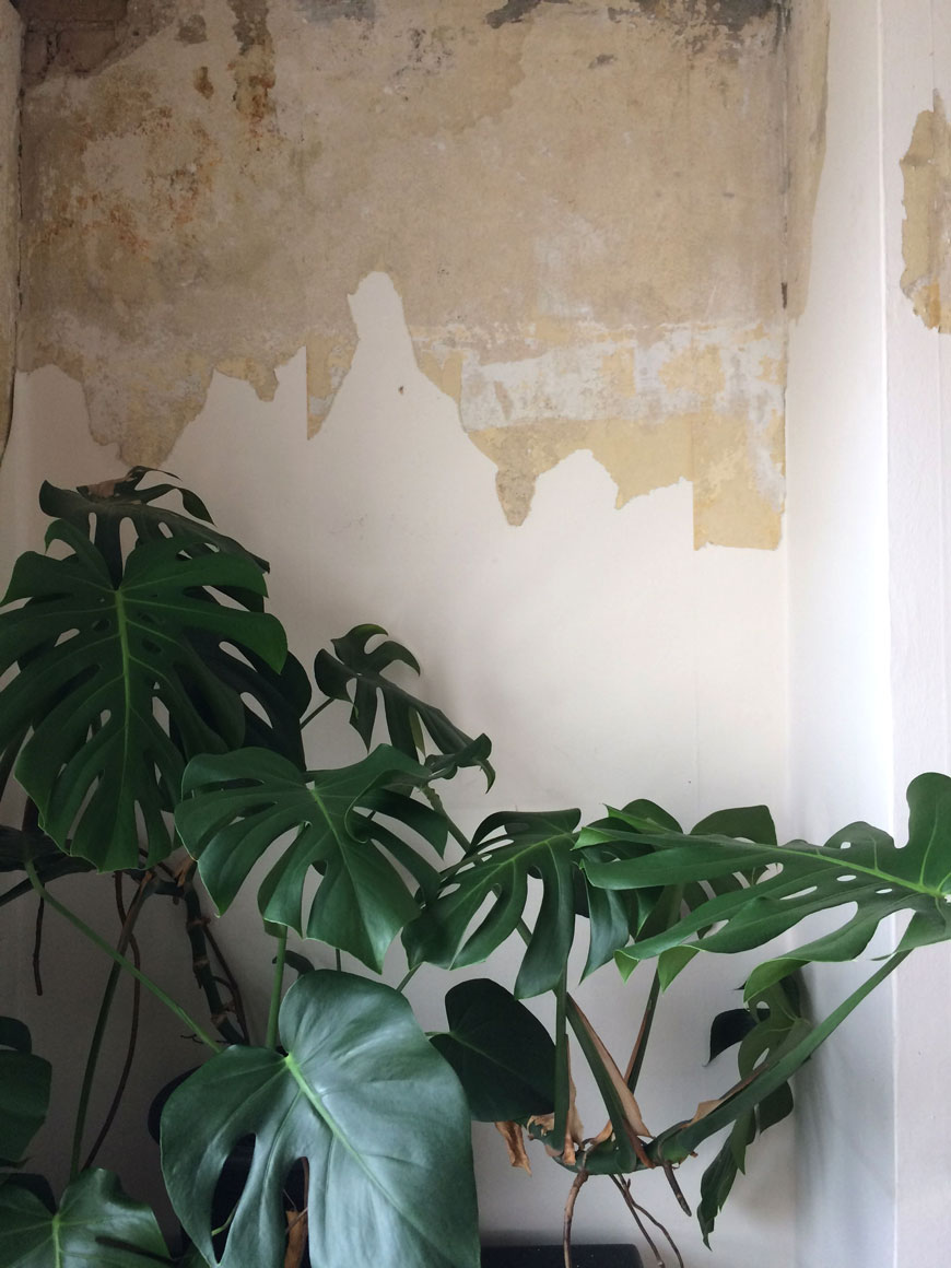bedroom renovations, part stripped wallpaper, cheeseplant
